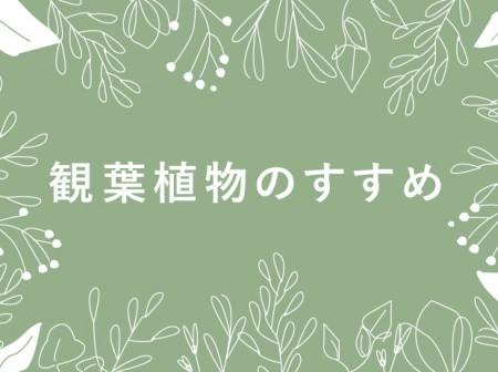 【選ぶならこれ!】インテリアにもぴったりのおすすめ観葉植物